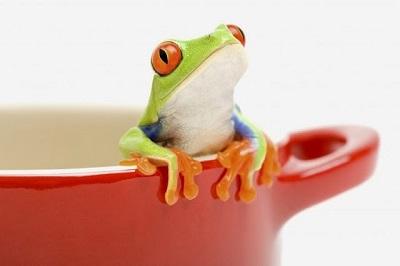 ¿Qué es el síndrome de la rana hervida?